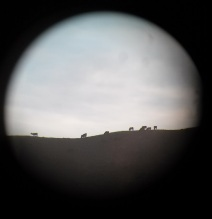 ElkInScope