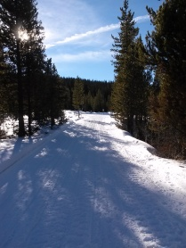 wintertrail.