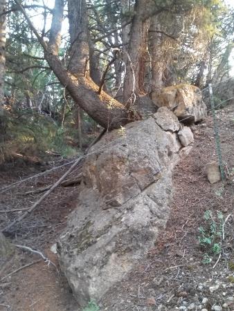 TreeandRock