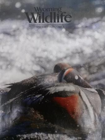 WyomingWildlife