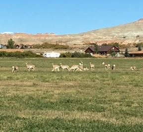 Antelope_100617